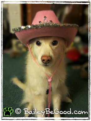 Wordless Wednesday: Cowgirl Nala